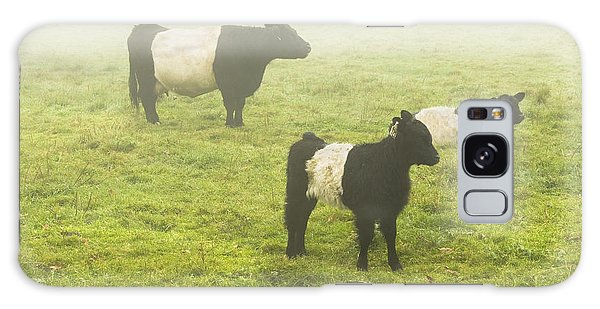 Belted Galloway Cows Grazing  In Foggy Farm Field Maine Galaxy Case by Keith Webber Jr