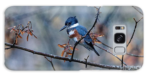 Belted Kingfisher Perch Galaxy Case