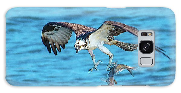 Best Osprey With Fish In One Talon Galaxy Case