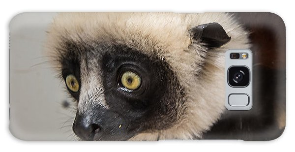 A Very Curious Sifaka Galaxy Case