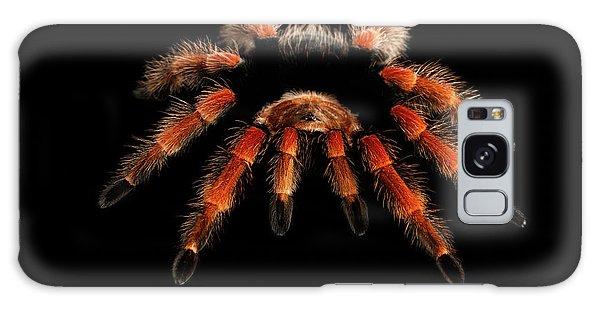 Big Hairy Tarantula Theraphosidae Isolated On Black Background Galaxy Case