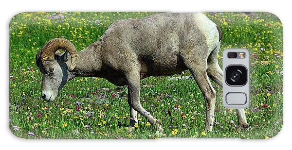 Big Horn Ram Eating Flowers In Glacier National Park Galaxy Case