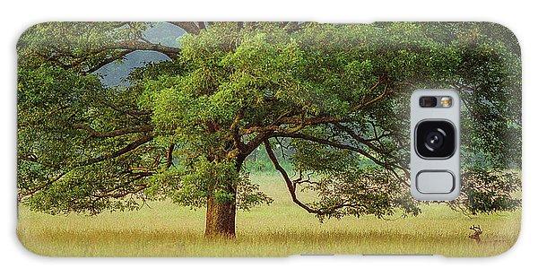 Big Oak Galaxy Case