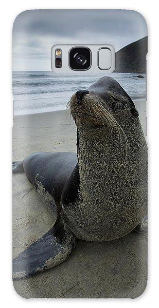 Big Seal Galaxy Case