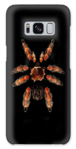 Big Spider Brachypelma Boehmei Galaxy Case