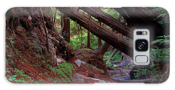 Big Sur Redwood Canyon Galaxy Case