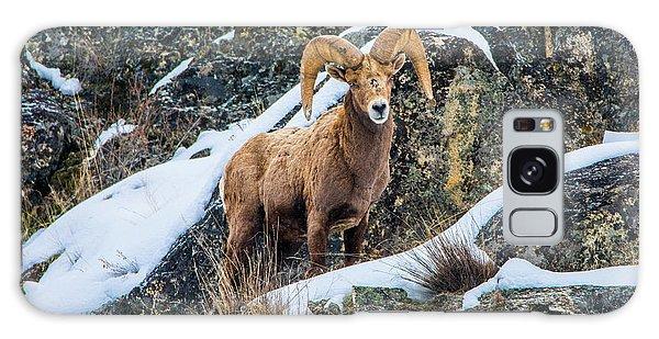 Bighorn Ram 3 Galaxy Case