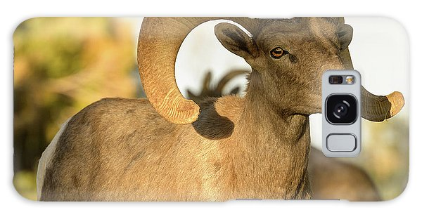 Bighorn Ram Galaxy Case by Scott Warner