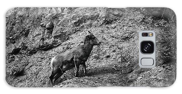 Bighorn Sheep Ewe On Wolf Creek Pass Galaxy Case