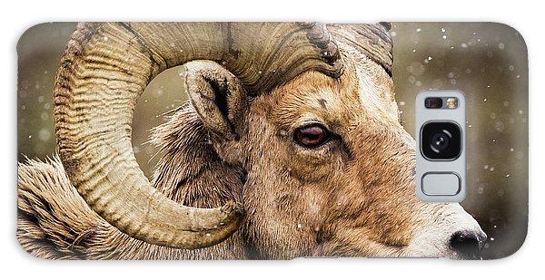 Bighorn Sheep In Winter Galaxy Case