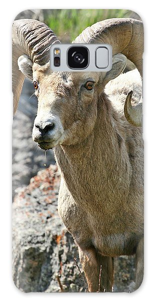 Galaxy Case featuring the photograph Bighorn Sheep by Wesley Aston