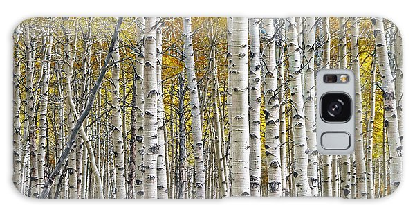 Birch Tree Grove With A Touch Of Yellow Color Galaxy Case