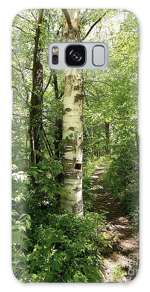 Birch Tree Hiking Trail Galaxy Case by Phil Perkins