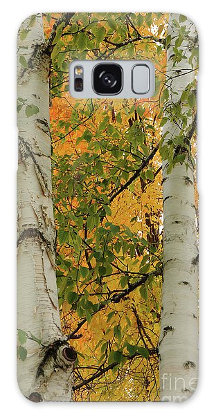 Birch Tree Galaxy Case