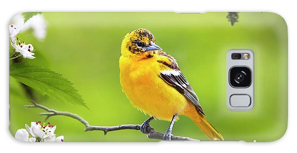 Bird And Blooms - Baltimore Oriole Galaxy Case