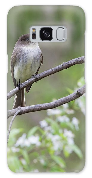 Bird - Eastern Phoebe Galaxy Case by Ron Grafe