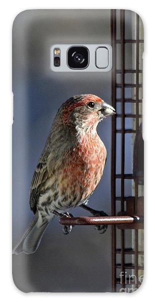 Bird Feeding In The Afternoon Sun Galaxy Case