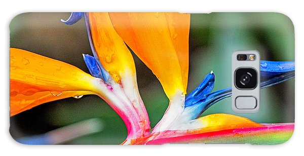Bird Of Paradise After The Rain Galaxy Case