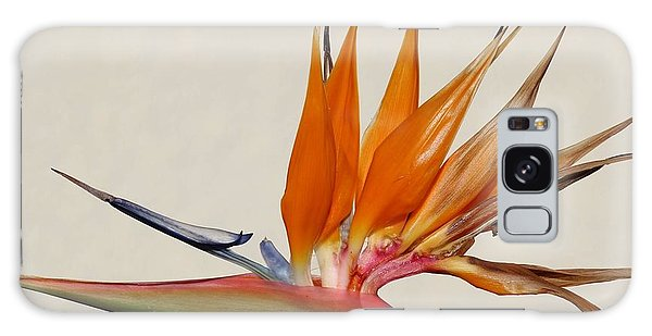 Bird Of Paradise With White Background Galaxy Case