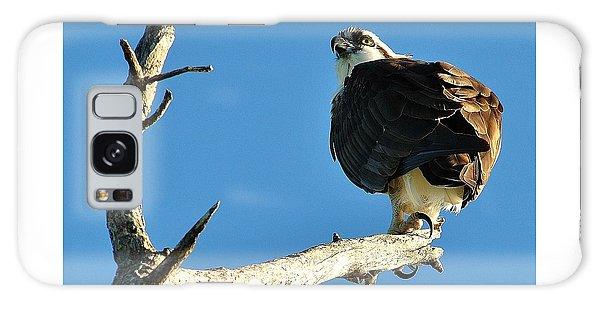 Birds 10 17 Galaxy Case