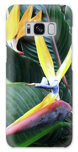 Birds Of Paradise With Leaves Galaxy Case