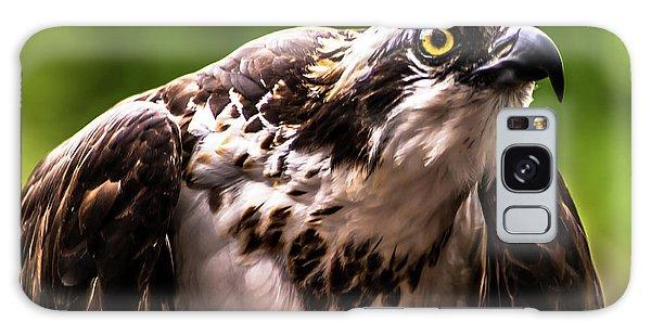 Birds Of Prey Sonoma County Galaxy Case