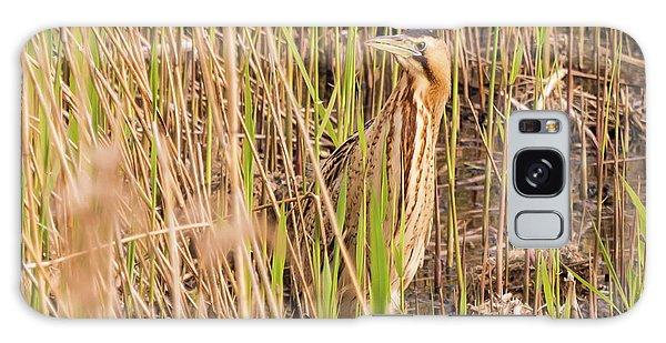 Bittern In The Reeds Galaxy Case