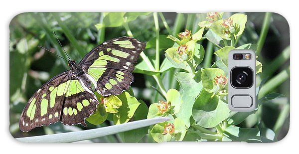 Black And Green Butterfly Galaxy Case