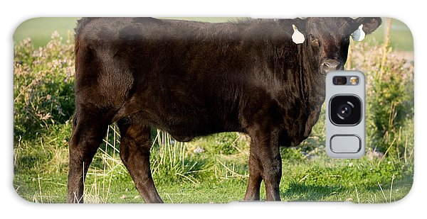 Black Angus Calf In Green Grassy Pasture Galaxy Case