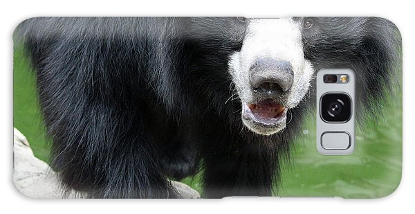Sun Bear Galaxy Case by Inspirational Photo Creations Audrey Woods