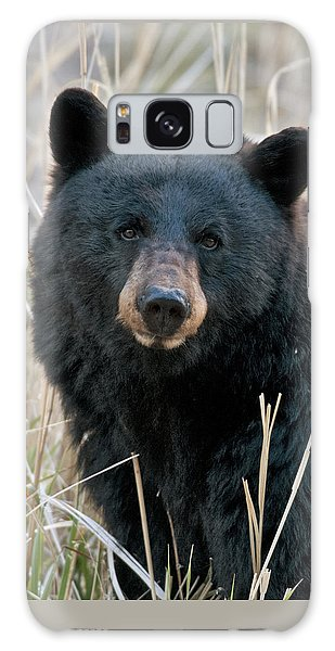Black Bear Closeup Galaxy Case