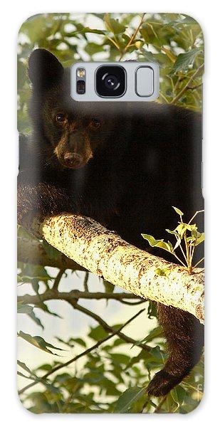 Black Bear Cub Resting On A Tree Branch Galaxy Case