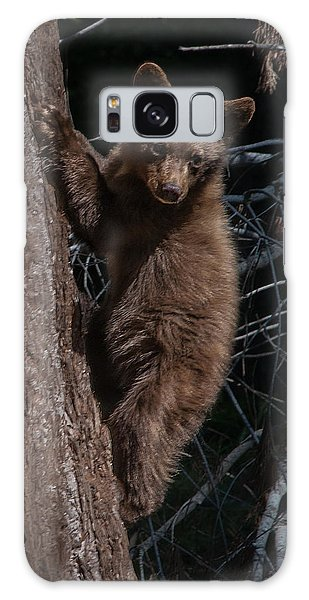 Black Bear Cub Sequoia National Park Galaxy Case