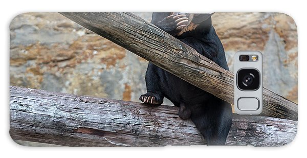 Black Bear Cub Sitting On Tree Trunk Galaxy Case