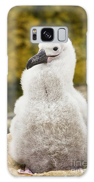 Albatross Galaxy Case - Black Browed Albatross Chic by Yva Momatiuk John Eastcott