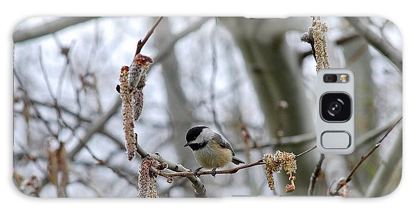 Black-capped Chickadee 20120321_38a Galaxy Case by Tina Hopkins