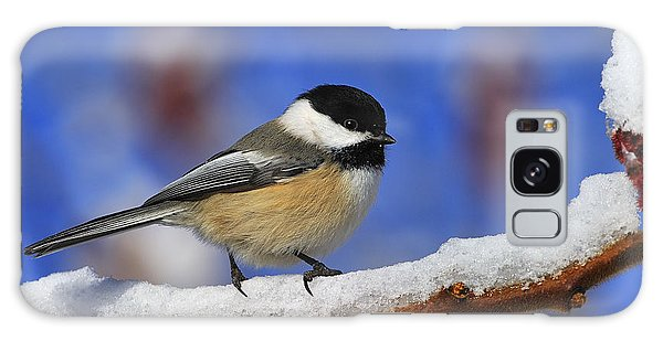 Black-capped Chickadee In Sumac Galaxy Case