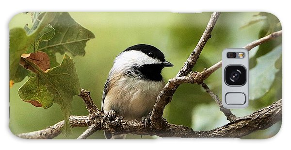 Black Capped Chickadee On Branch Galaxy Case by Sheila Brown