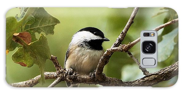Black Capped Chickadee On Branch Galaxy Case