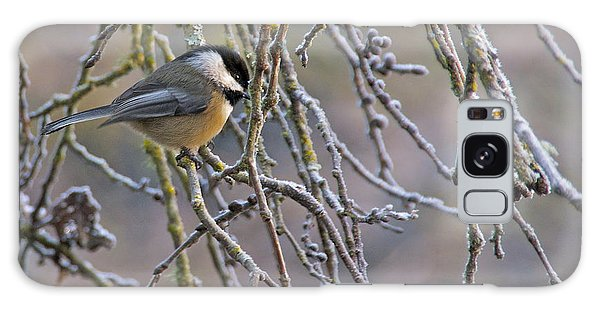 Black-capped Chickadee Galaxy Case by Sean Griffin
