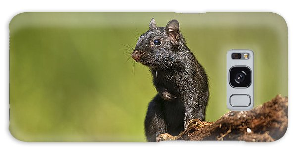 Black Chipmunk On Log Galaxy Case