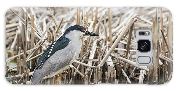 Black-crowned Night Heron 2017-1 Galaxy Case by Thomas Young