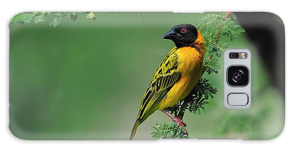Black-headed Weaver Galaxy Case