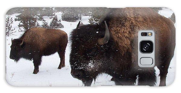 Black Hills Bison Galaxy Case