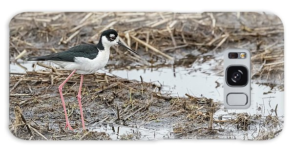 Black-necked Stilt 2017-1 Galaxy Case by Thomas Young