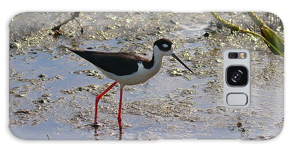 Black Necked Stilt Galaxy Case