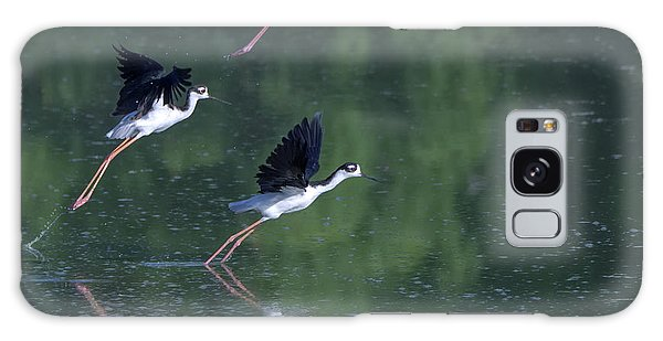 Black-necked Stilts 4302-080917-2cr Galaxy Case
