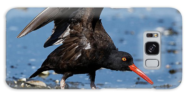 Black Oyster Catcher Galaxy Case
