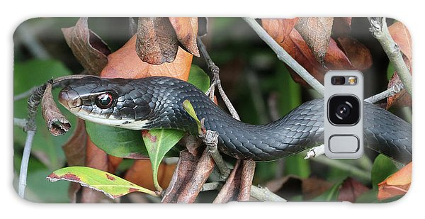 Grass Snake Galaxy Case - Black Racer Snake Stare Down by Carol Groenen
