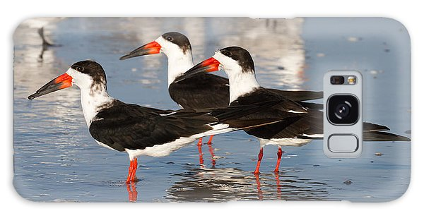Black Skimmer Birds Galaxy Case